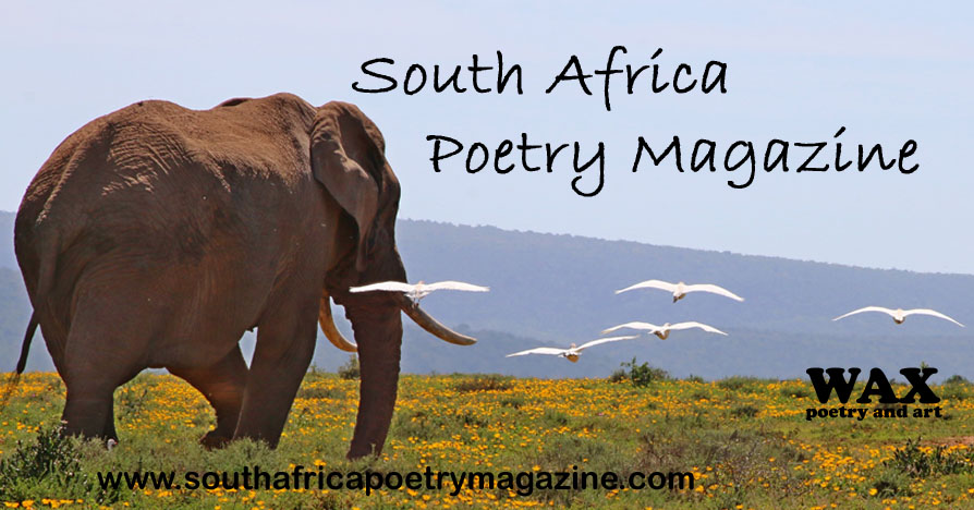 South Africa Poetry Magazine - image shows an elephant walking  over grassland with yellow flowers, with white birds hovering nearby.