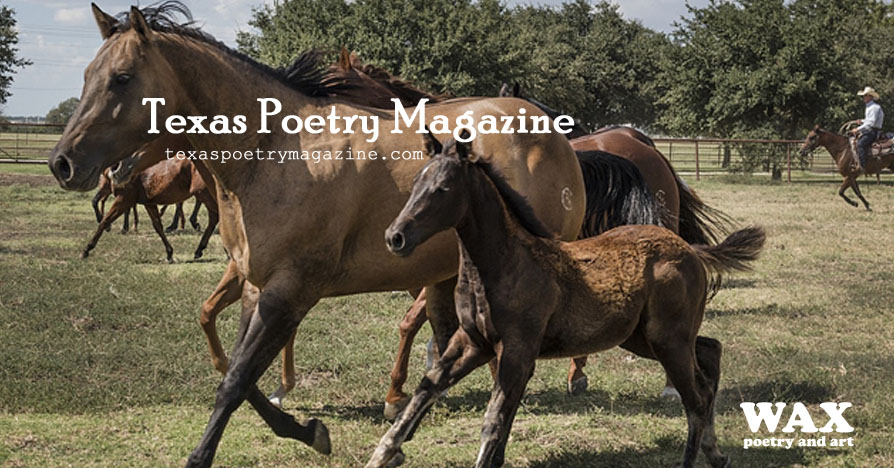 Header image shows mare and foal galloping in the foreground, other horses in background - Texas Poetry Magazine - texaspoetrymagazine.com