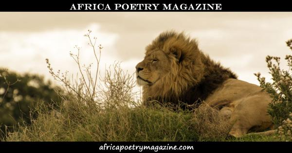 Smaller Header image for Facebook sharing. Africa Poetry Magazine. www.africapoetrymagazine.com