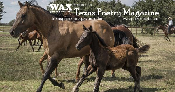 Image shows horses running - Texas Poetry Magazine - texaspoetrymagazine.com