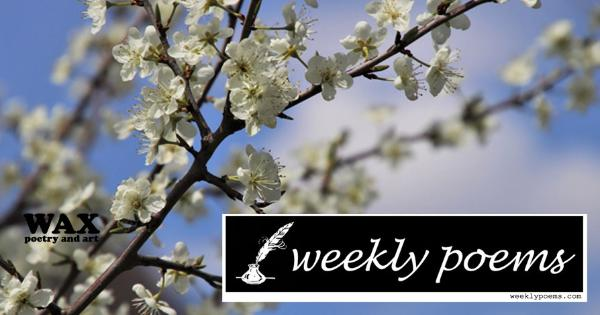 Weekly Poems - weeklypoems.com - image shows a brown branch with white flowers in front of a blue sky.